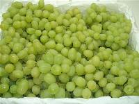 优质青提葡萄批发青提葡萄基地价格