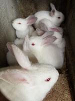 肉兔养殖技术 肉兔的养殖利润分析