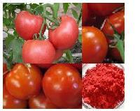 番茄粉基地种植品质保证