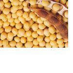 大豆多肽   现货供应   包邮