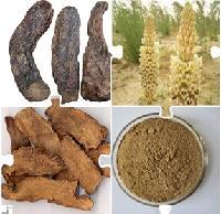 特价销售    肉苁蓉提取物   生产厂家