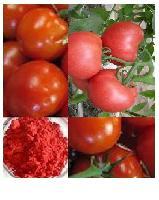 番茄粉 番茄提取物 天然果蔬粉