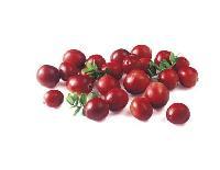 蔓越莓粉   蔓越莓提取物   品质保证 现货包邮