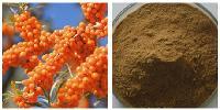沙棘酵素粉