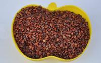 酸枣仁提取物 25公斤/纸板桶