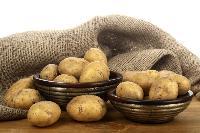 马铃薯粉  马铃薯膳食纤维   全国