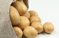 土豆膳食纤维量大从优