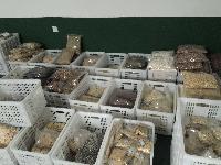 微波五谷杂粮烘烤设备,坚果烘烤熟化杀菌设