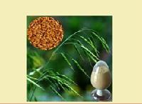 燕麦籽提取物