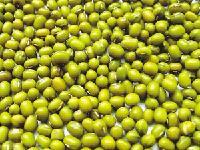 绿豆批发 优质进口绿豆低价批发