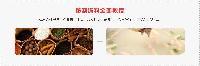 专业单县羊汤技术培训教学班