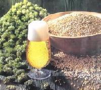 优质啤酒花提取物 天然植物提取 厂家直销