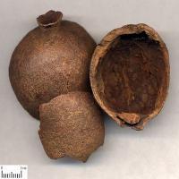 石榴果皮鞣花酸  10-98%