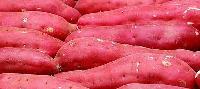 红薯提取物
