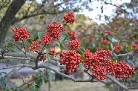 红豆营养粉
