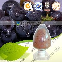 供葡萄籽提取物原花青素 现货
