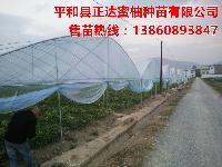 正达大三红蜜柚品种来源