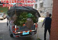 买三红蜜柚苗,请认准平和县正达蜜柚种苗有限公司