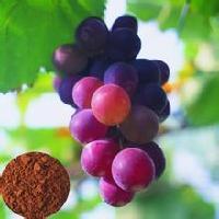 原花青素  葡萄籽提取  现货供应