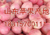 苹果批发价格一斤多钱?山东红富士苹果供应价格