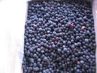进口美国 蓝莓冻果 鲜果压榨蓝莓浓缩汁 盈润直销