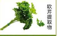 欧芹提取物 植物提取物 厂家直销 品质保证
