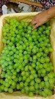 *葡萄批发价格陕西青提葡萄产地价格