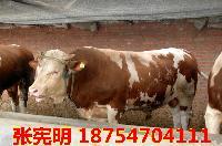 夏洛莱牛销售$肉牛多少钱一头
