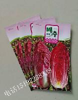 紫色大白菜种子