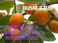 陕西七月黄柿子价格