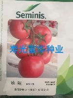美国圣尼斯番茄种子-欧硕