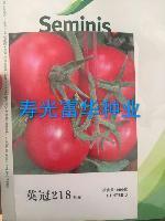 圣尼斯番茄种子-英冠218
