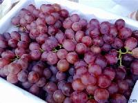 陕西红提葡萄批发价格,大荔葡萄行情走势