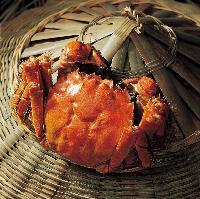 桓景-阳澄湖大闸蟹