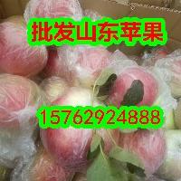 批发山东美八苹果产地直销价格低品质好