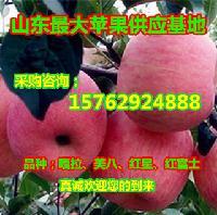 沂水美八苹果价格