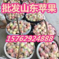今年嘎拉苹果价格