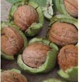 2016陕西青皮核桃价格