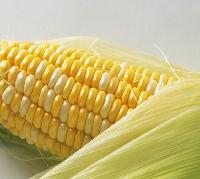 排毒降压 玉米纤维素  厂家现货包邮