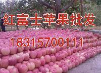 山东红富士苹果低价大促销山东苹果产地批发