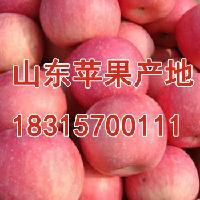 山东红富士苹果价格最新红富士苹果批发价格介绍详细