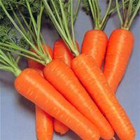 胡萝卜粉 食品饮料冲调粉