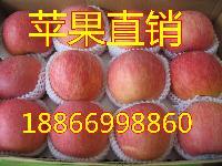 最新山东红富士苹果价格