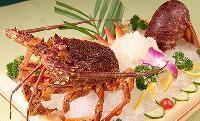供应 澳洲龙虾 澳大利亚澳龙