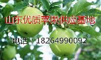 金帅苹果价格 山东种植产地