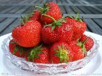 妙香草莓苗 长势好、抗性強 果实香甜可口
