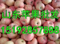 山东省红富士苹果销售价格 红富士苹果价格