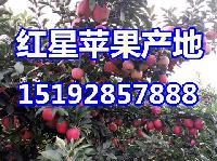 现在红星苹果产地批发价格