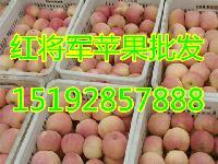 预测今年红将军苹果价格是多少