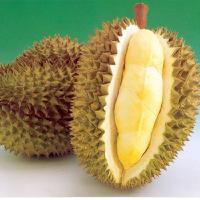 深圳水果进口报关代理/代理公司